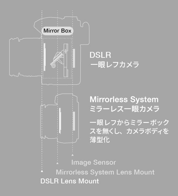35ミリフォーマットレンズの場合 マイクロフォーサーズシステムレンズサイズの場合 同等の明るさで、同じ画角が得られるレンズをほぼ1/2の大きさで表現。
